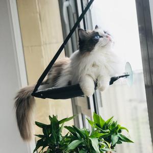招娣儿是一只猫